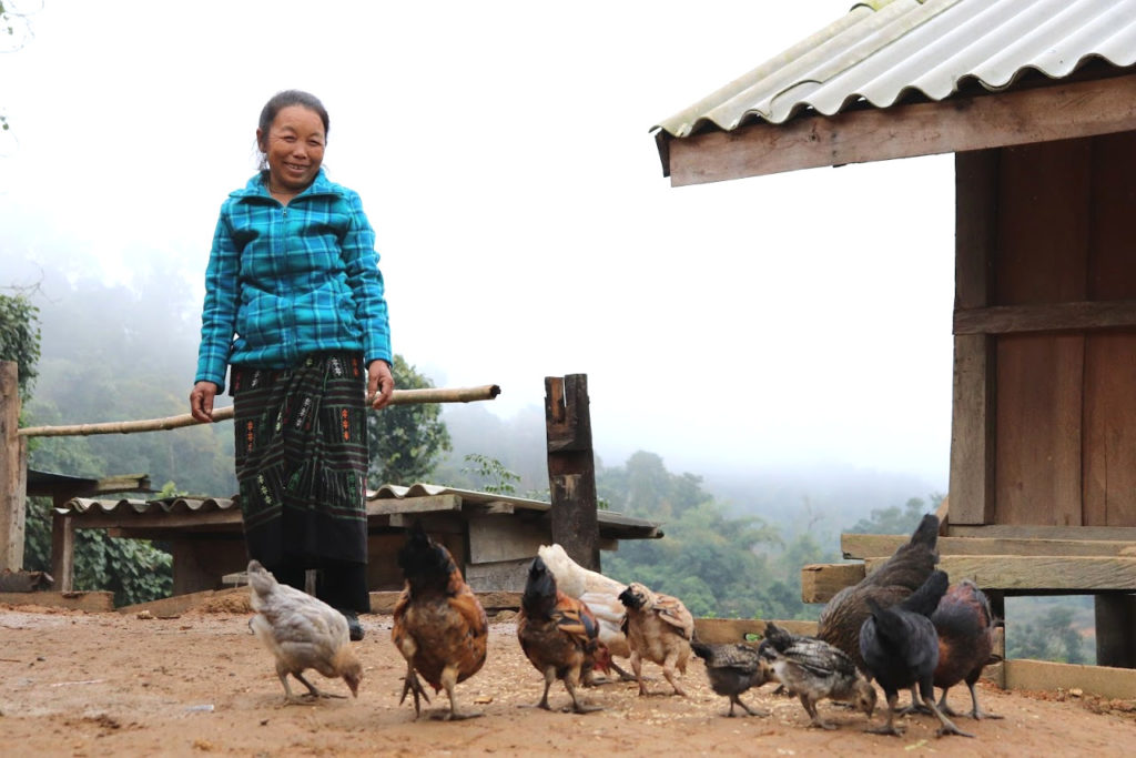 Farmers Like Ms Her Switching From Opium Poppies to Coffee Beans in Laos' Huaphan Province with Vanmai Coffee